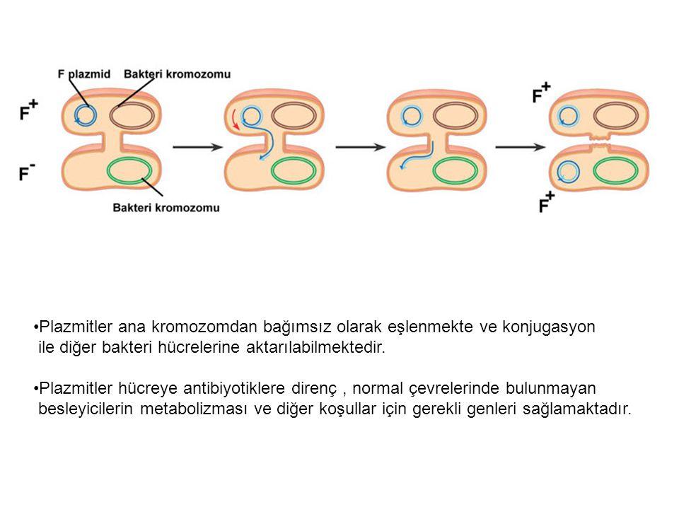 Bazı bakteriler zor ortam koşullarında endospor meydana getirirler.