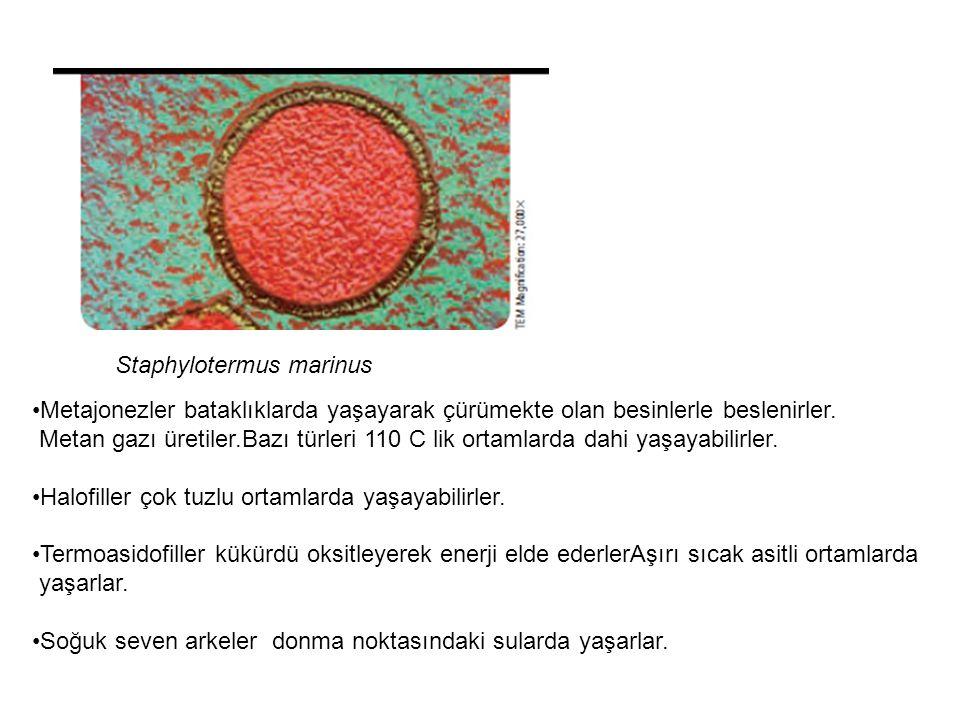 Arkeler bakterilerin yaşayamadıkları kadar zor ortamlarda yaşarlar.