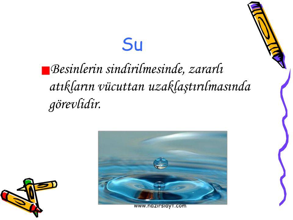www.hazirslayt.com Su Besinlerin sindirilmesinde, zararlı atıkların vücuttan uzaklaştırılmasında görevlidir.