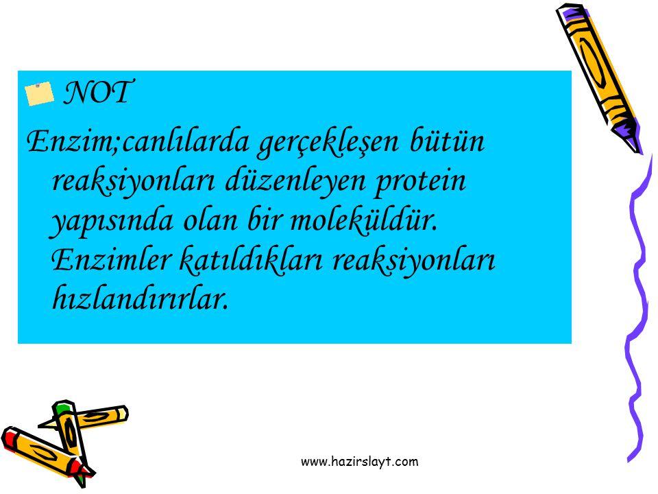 www.hazirslayt.com NOT Enzim;canlılarda gerçekleşen bütün reaksiyonları düzenleyen protein yapısında olan bir moleküldür. Enzimler katıldıkları reaksi