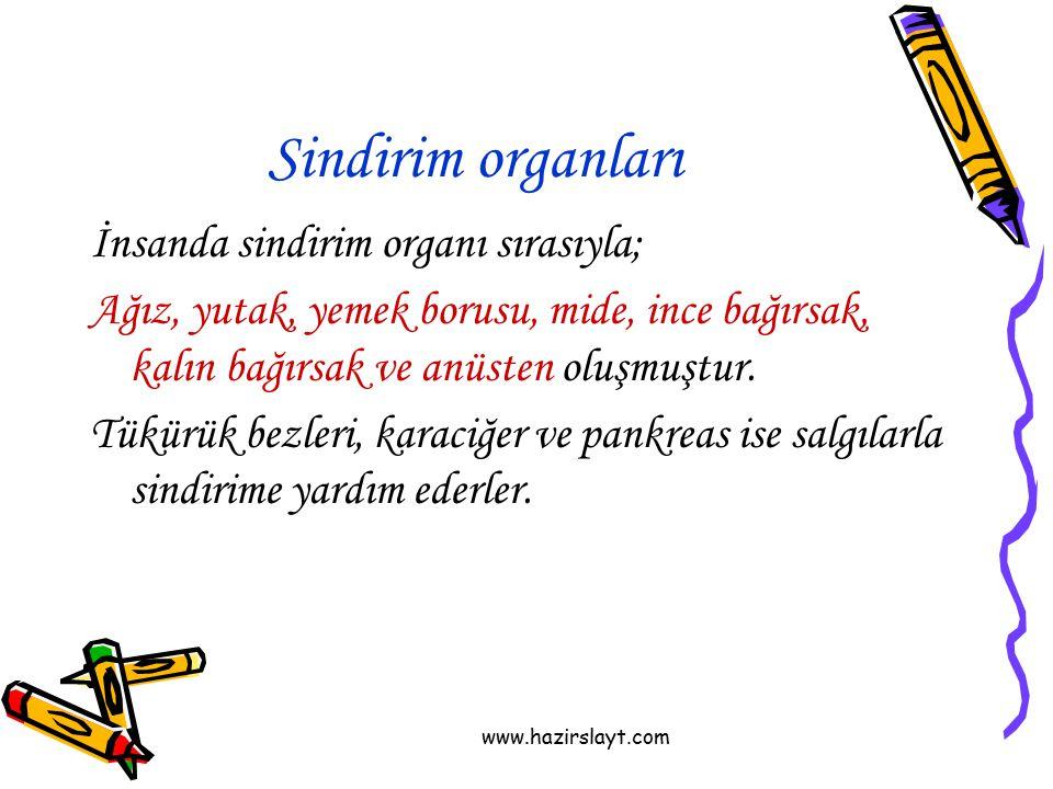 www.hazirslayt.com Sindirim organları İnsanda sindirim organı sırasıyla; Ağız, yutak, yemek borusu, mide, ince bağırsak, kalın bağırsak ve anüsten olu