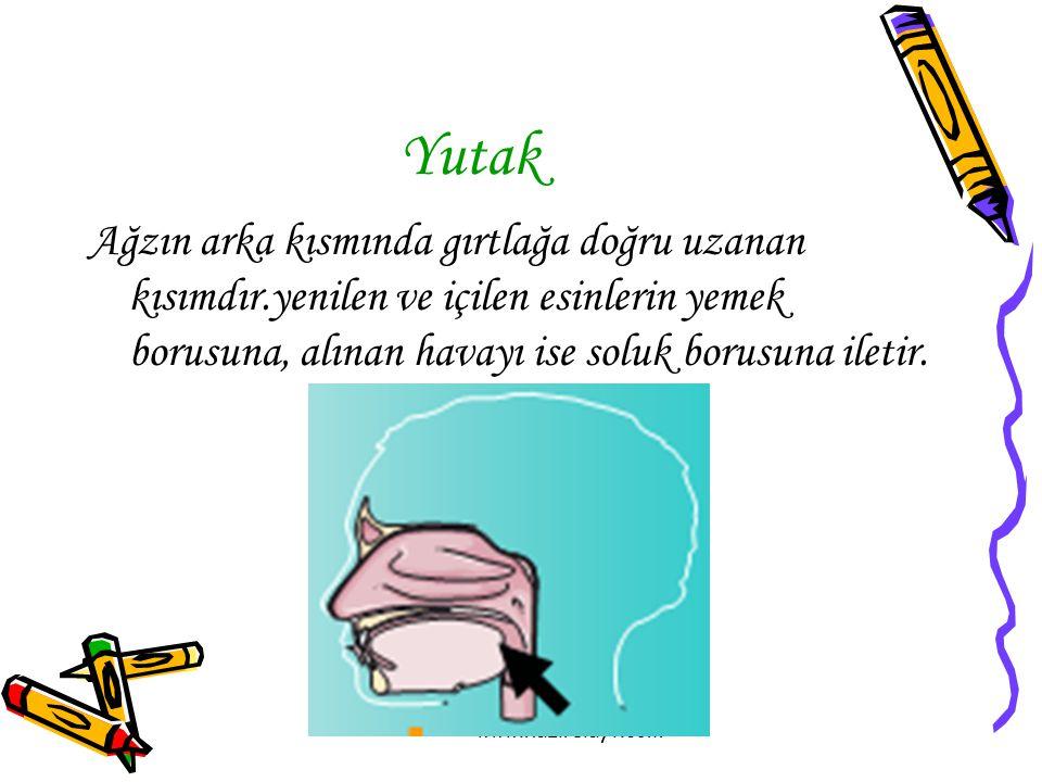 www.hazirslayt.com Yutak Ağzın arka kısmında gırtlağa doğru uzanan kısımdır.yenilen ve içilen esinlerin yemek borusuna, alınan havayı ise soluk borusu