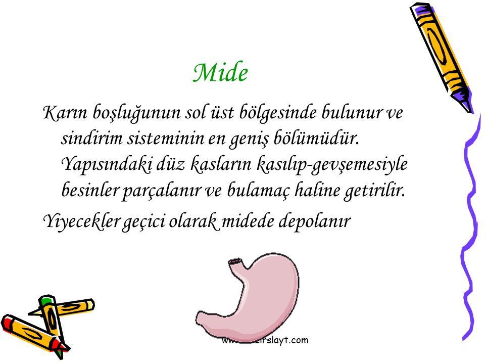 www.hazirslayt.com Mide Karın boşluğunun sol üst bölgesinde bulunur ve sindirim sisteminin en geniş bölümüdür. Yapısındaki düz kasların kasılıp-gevşem