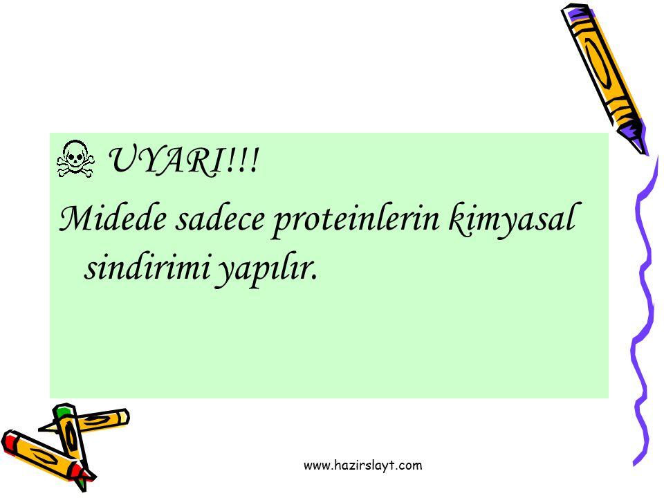 www.hazirslayt.com UYARI!!! Midede sadece proteinlerin kimyasal sindirimi yapılır.