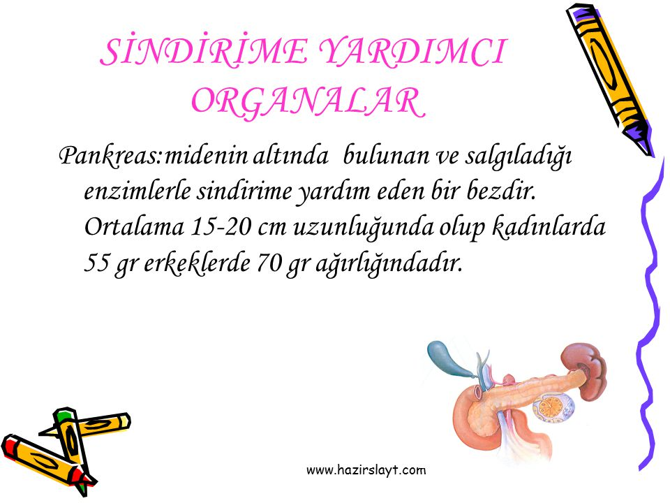 SİNDİRİME YARDIMCI ORGANALAR Pankreas:midenin altında bulunan ve salgıladığı enzimlerle sindirime yardım eden bir bezdir. Ortalama 15-20 cm uzunluğund