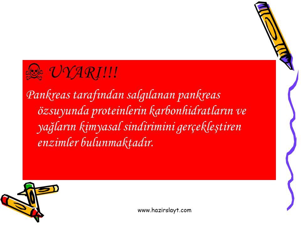 www.hazirslayt.com UYARI!!! Pankreas tarafından salgılanan pankreas özsuyunda proteinlerin karbonhidratların ve yağların kimyasal sindirimini gerçekle