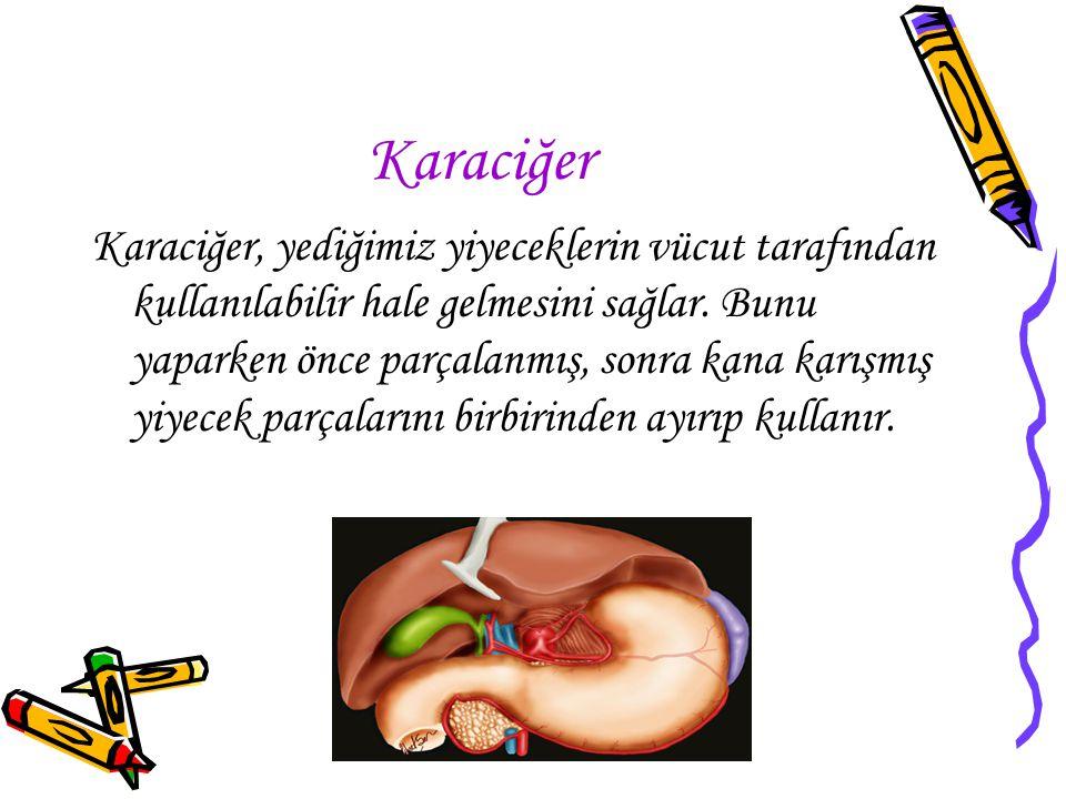 www.hazirslayt.com Karaciğer Karaciğer, yediğimiz yiyeceklerin vücut tarafından kullanılabilir hale gelmesini sağlar. Bunu yaparken önce parçalanmış,
