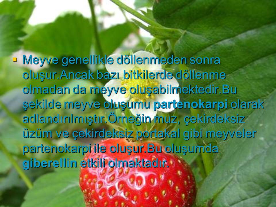  Meyve genellikle döllenmeden sonra oluşur.Ancak bazı bitkilerde döllenme olmadan da meyve oluşabilmektedir.Bu şekilde meyve oluşumu partenokarpi ola