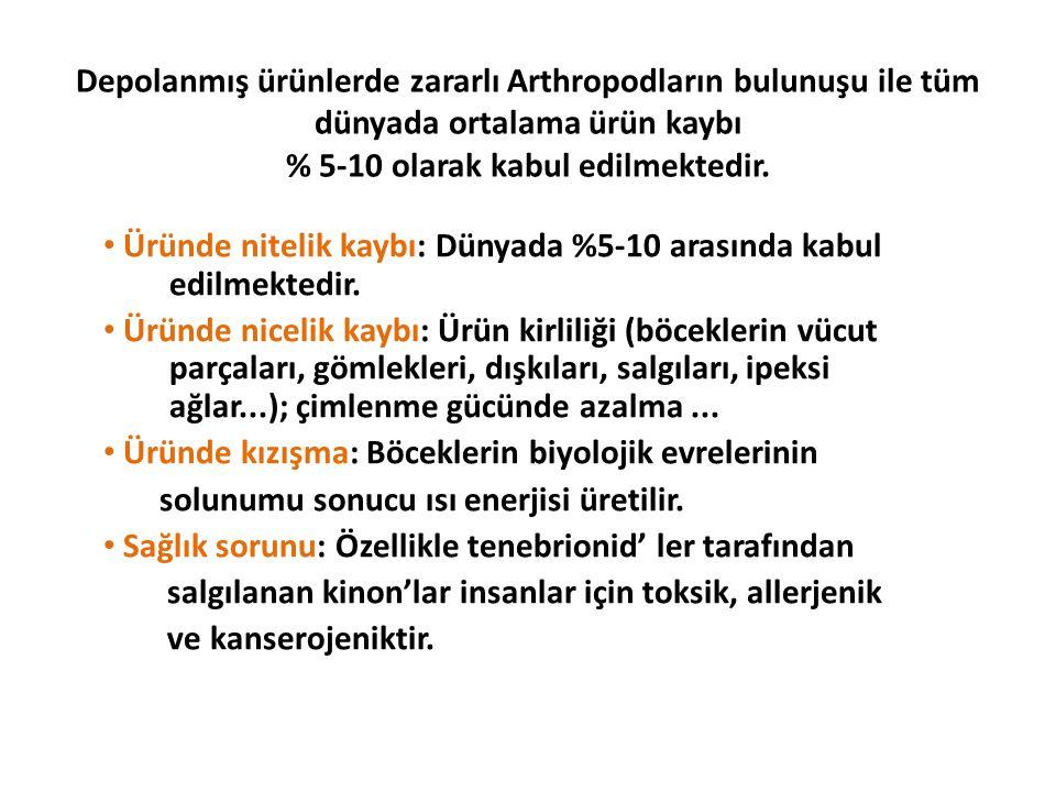 Tütün güvesi(Ephestia elutella) Lepidoptera: Pyralidae Ergin rengi sarıdan griye kadar değişir.