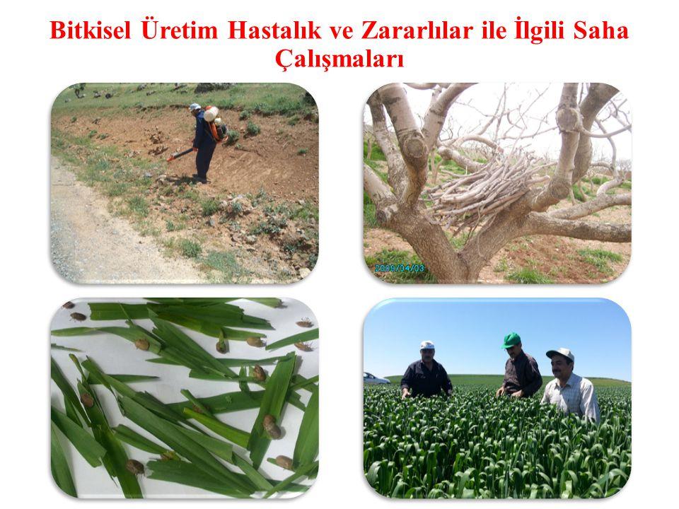 Bitkisel Üretim Hastalık ve Zararlılar ile İlgili Saha Çalışmaları