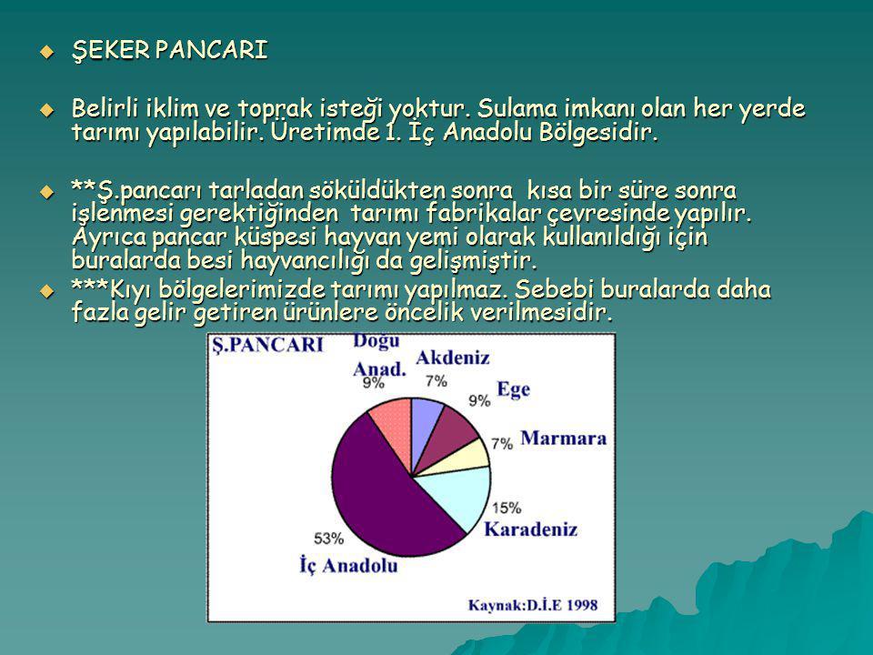 ŞEKER PANCARI  ŞEKER PANCARI  Belirli iklim ve toprak isteği yoktur.