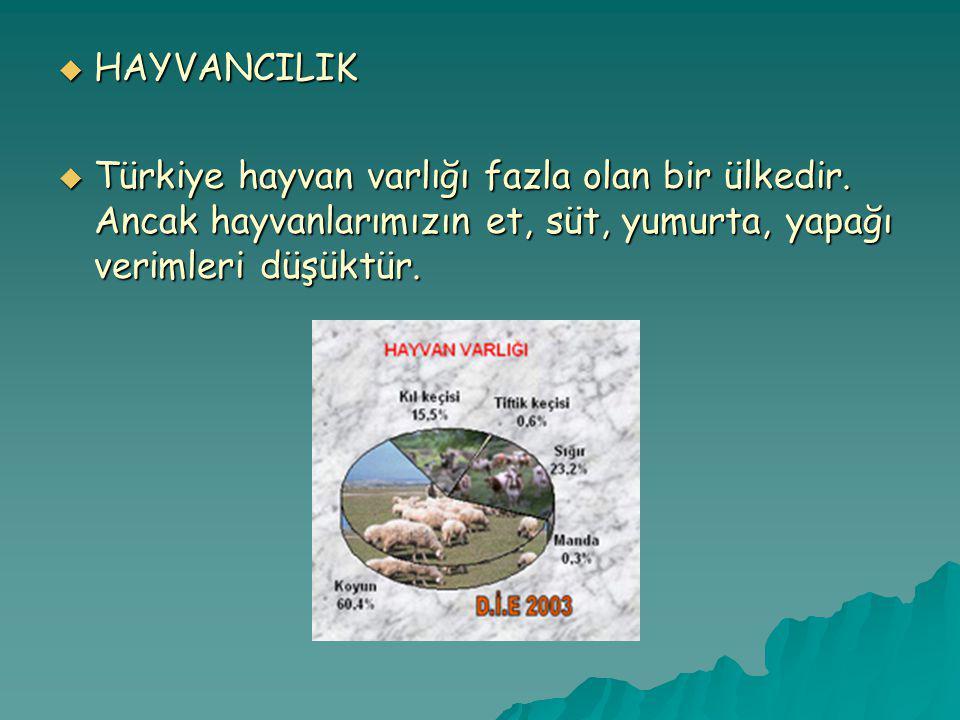  HAYVANCILIK  Türkiye hayvan varlığı fazla olan bir ülkedir.