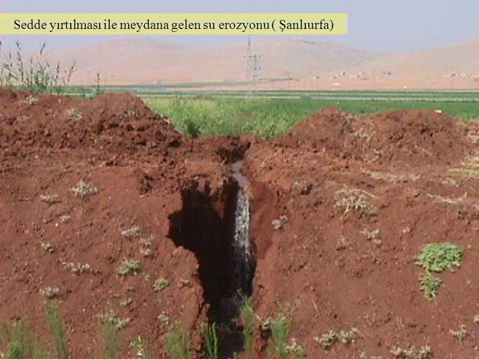 Sedde yırtılması ile meydana gelen su erozyonu ( Şanlıurfa)