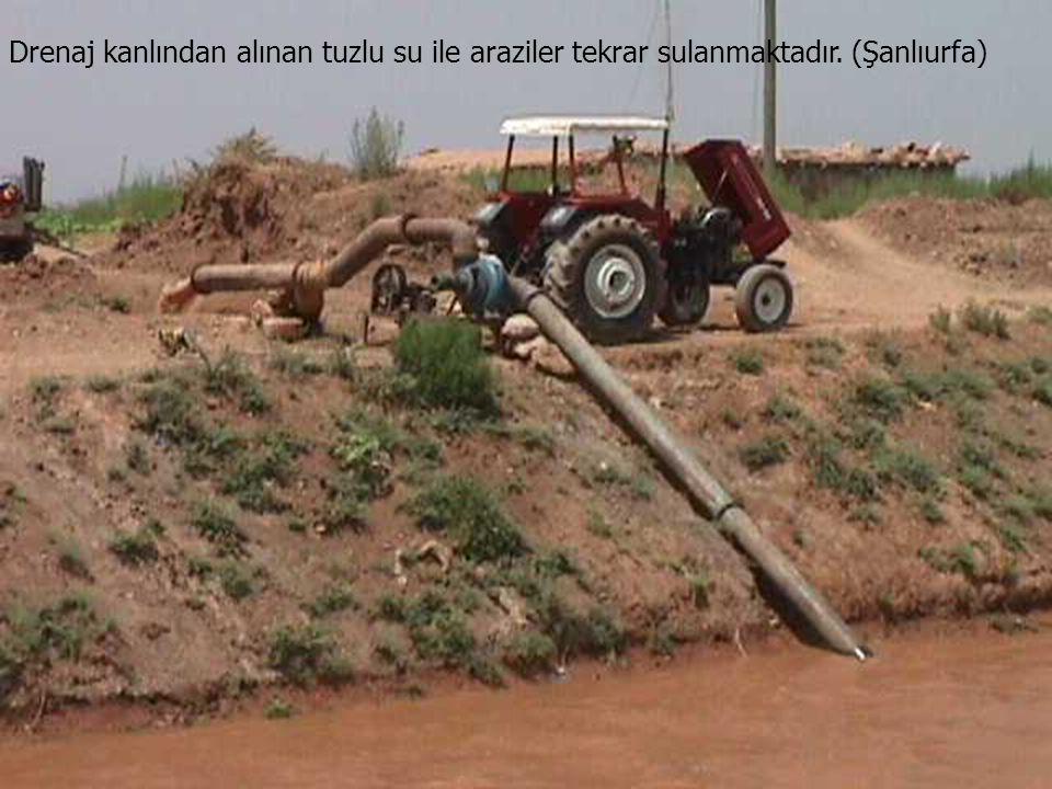 Drenaj kanlından alınan tuzlu su ile araziler tekrar sulanmaktadır. (Şanlıurfa)