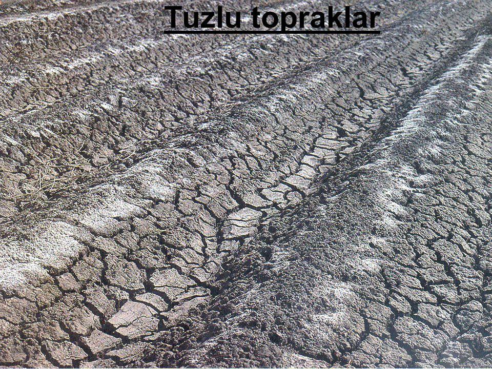 Tuzlu topraklar