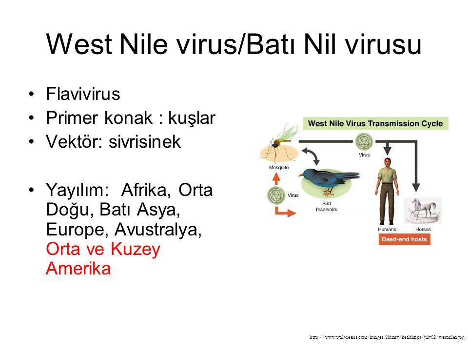West Nile virus/Batı Nil virusu Flavivirus Primer konak : kuşlar Vektör: sivrisinek Yayılım: Afrika, Orta Doğu, Batı Asya, Europe, Avustralya, Orta ve