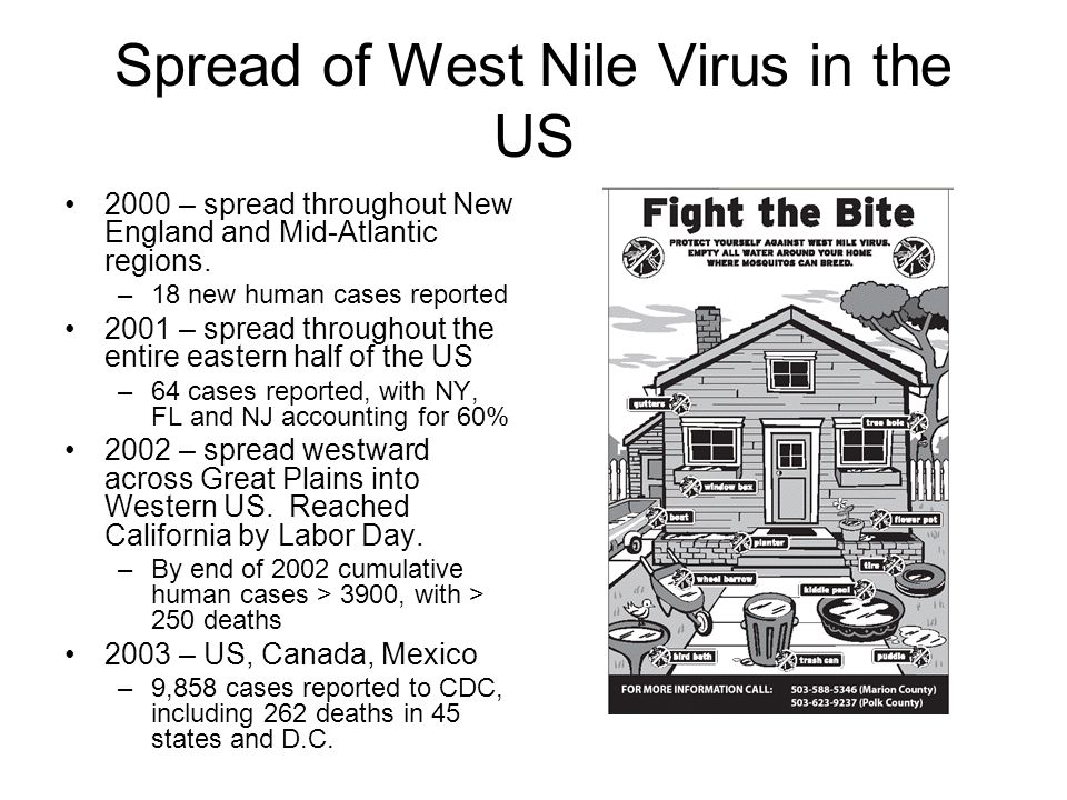 Spread of West Nile Virus in the US 2000 – spread throughout New England and Mid-Atlantic regions. –18 new human cases reported 2001 – spread througho