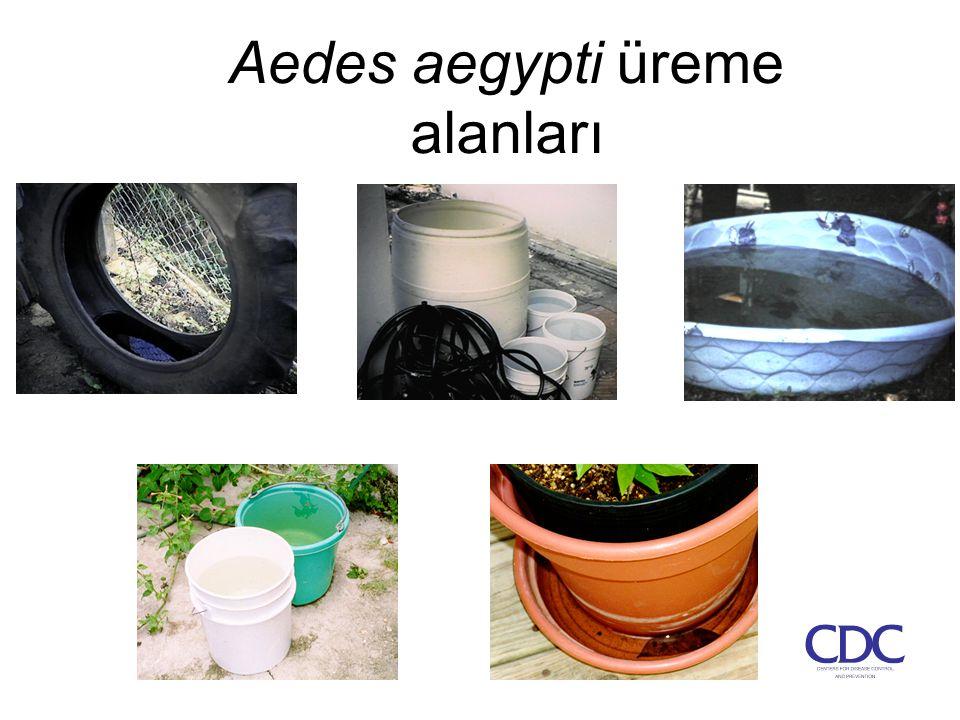 Aedes aegypti üreme alanları