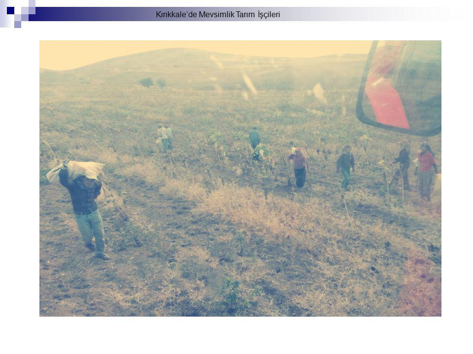 Kırıkkale'de Mevsimlik Tarım İşçileri