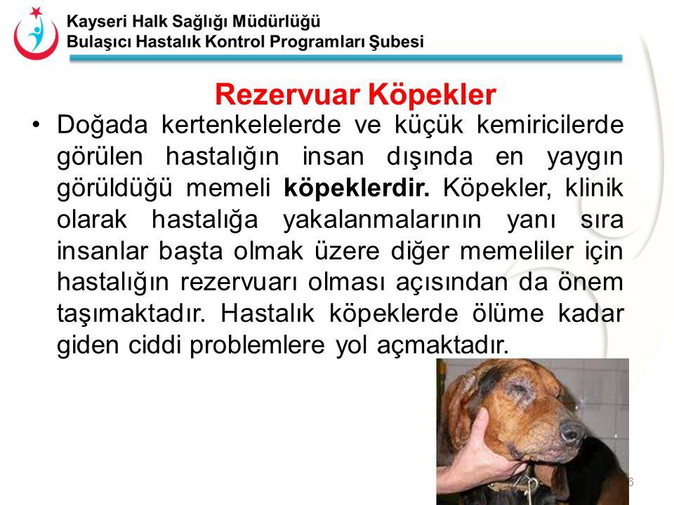 Kimyasal Yöntemler Ev içi ve ev dışı kalıcı insektisit uygulaması Türkiye'de kullanılan insektisitler – Deltamethrine – Lambda-cyhalothrine – Cyphenothrine – Nisan ve Ekim'de kalıcı ilaçlama Uygulama yapılacak yerdeki popülasyon üzerinde hassasiyet denemeleri yapılması önemli.