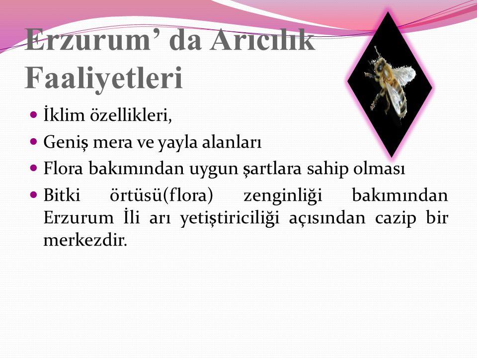 Erzurum' da Arıcılık Faaliyetleri İklim özellikleri, Geniş mera ve yayla alanları Flora bakımından uygun şartlara sahip olması Bitki örtüsü(flora) zenginliği bakımından Erzurum İli arı yetiştiriciliği açısından cazip bir merkezdir.