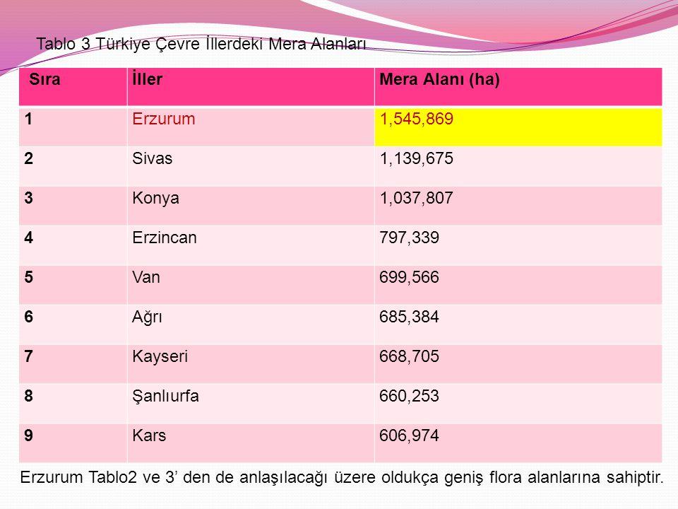 SıraİllerMera Alanı (ha) 1Erzurum1,545,869 2Sivas1,139,675 3Konya1,037,807 4Erzincan797,339 5Van699,566 6Ağrı685,384 7Kayseri668,705 8Şanlıurfa660,253 9Kars606,974 Tablo 3 Türkiye Çevre İllerdeki Mera Alanları Erzurum Tablo2 ve 3' den de anlaşılacağı üzere oldukça geniş flora alanlarına sahiptir.