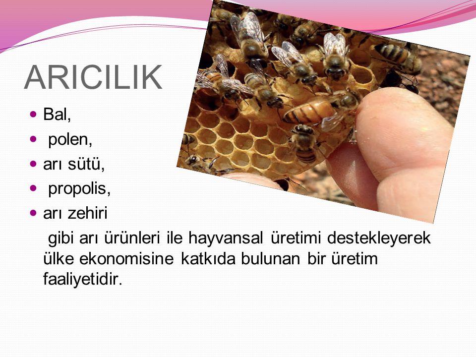 ARICILIK Bal, polen, arı sütü, propolis, arı zehiri gibi arı ürünleri ile hayvansal üretimi destekleyerek ülke ekonomisine katkıda bulunan bir üretim faaliyetidir.