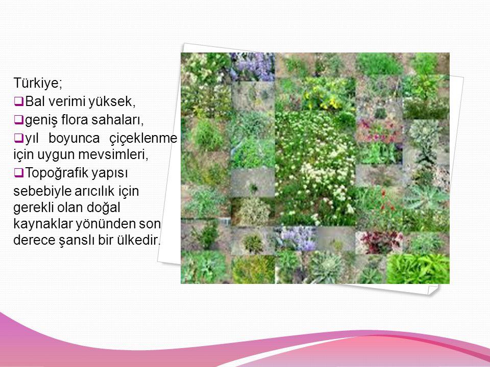 Türkiye;  Bal verimi yüksek,  geniş flora sahaları,  yıl boyunca çiçeklenme için uygun mevsimleri,  Topoğrafik yapısı sebebiyle arıcılık için gerekli olan doğal kaynaklar yönünden son derece şanslı bir ülkedir.