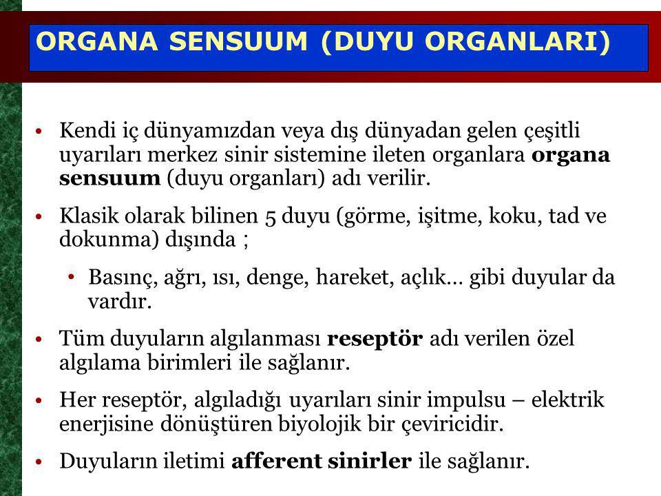 Kendi iç dünyamızdan veya dış dünyadan gelen çeşitli uyarıları merkez sinir sistemine ileten organlara organa sensuum (duyu organları) adı verilir. Kl