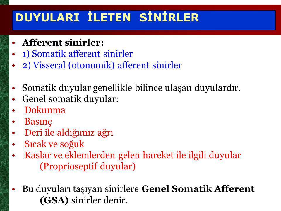 DUYULARI İLETEN SİNİRLER Afferent sinirler: 1) Somatik afferent sinirler 2) Visseral (otonomik) afferent sinirler Somatik duyular genellikle bilince ulaşan duyulardır.