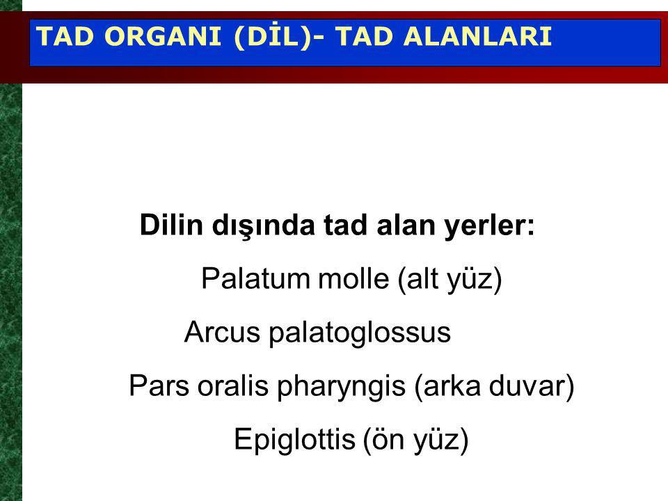 Palatum molle (alt yüz) Arcus palatoglossus Pars oralis pharyngis (arka duvar) Epiglottis (ön yüz) Dilin dışında tad alan yerler: TAD ORGANI (DİL)- TAD ALANLARI