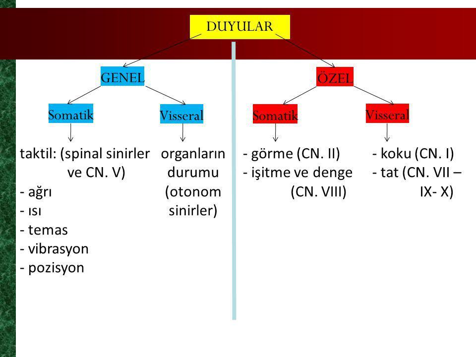 DUYULAR GENEL ÖZEL Somatik VisseralSomatik Visseral taktil: (spinal sinirler ve CN. V) - ağrı - ısı - temas - vibrasyon - pozisyon organların durumu (