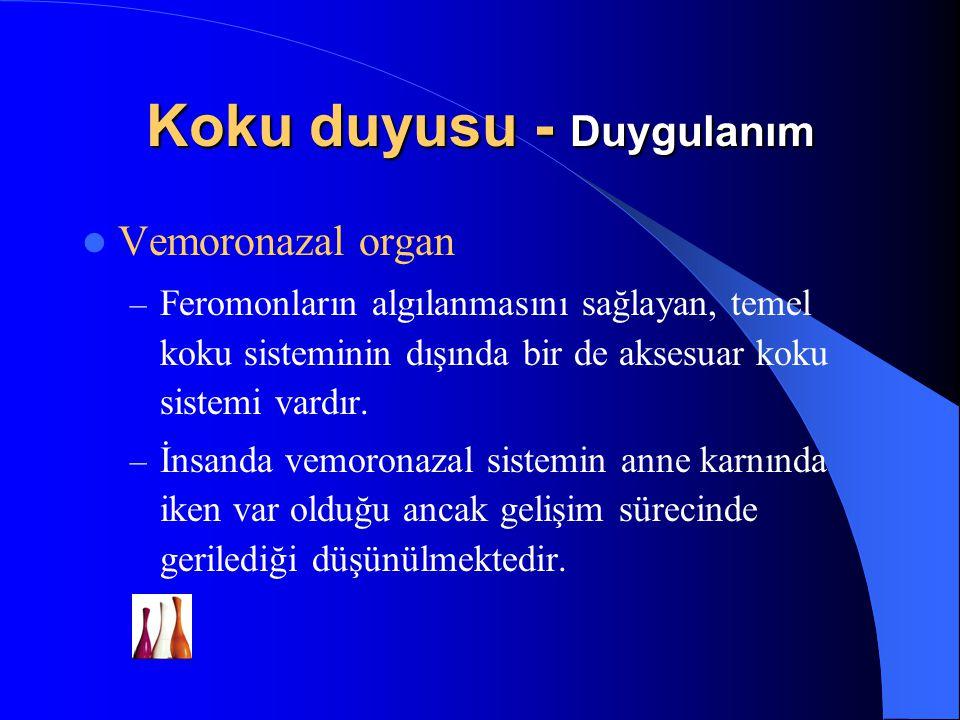 Vemoronazal organ – Feromonların algılanmasını sağlayan, temel koku sisteminin dışında bir de aksesuar koku sistemi vardır. – İnsanda vemoronazal sist
