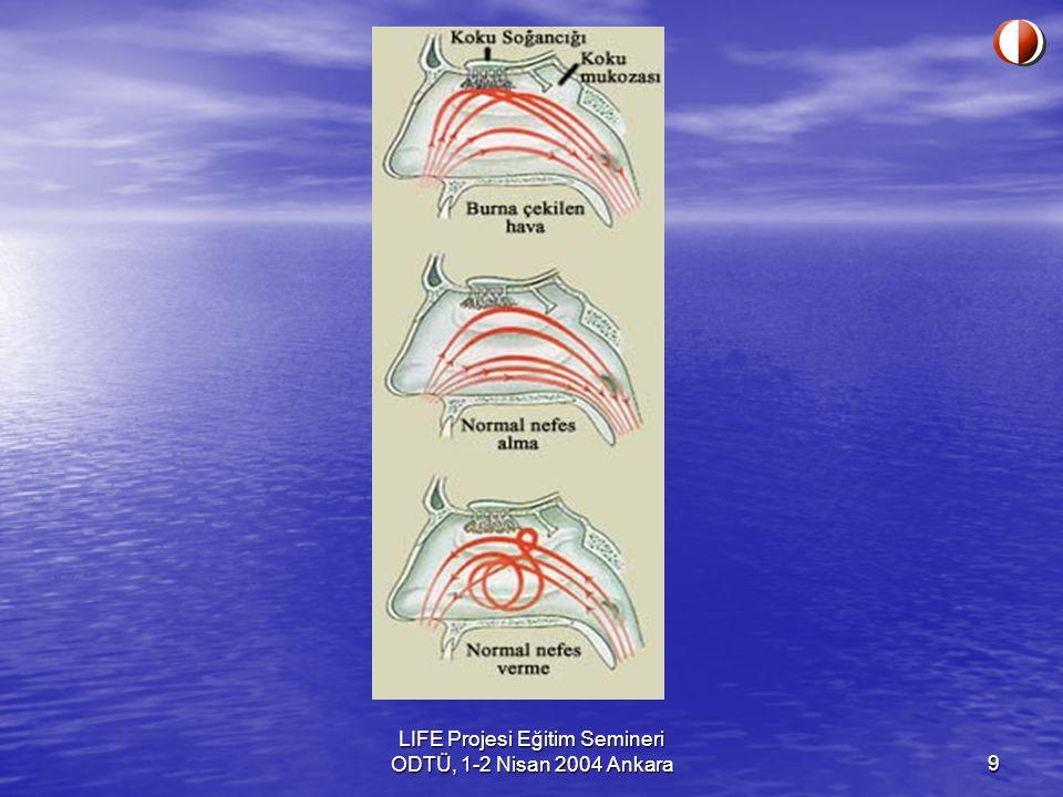 10 Devam Koku molekülleri önce olfaktori hücrelerini saran mukoza tabakası ile temas ederler.