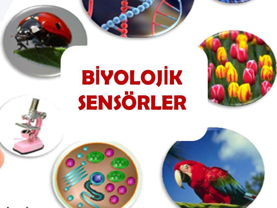 Biyosensörler, genel olarak analizlenecek madde ile seçimli bir şekilde etkileşime giren biyoaktif bir bileşenin, bu etkileşim sonucu ortaya çıkan sinyali ileten bir iletici sistemle birleştirilmesi ve bunların bir ölçüm sistemiyle kombinasyonuyla oluşturulurlar.