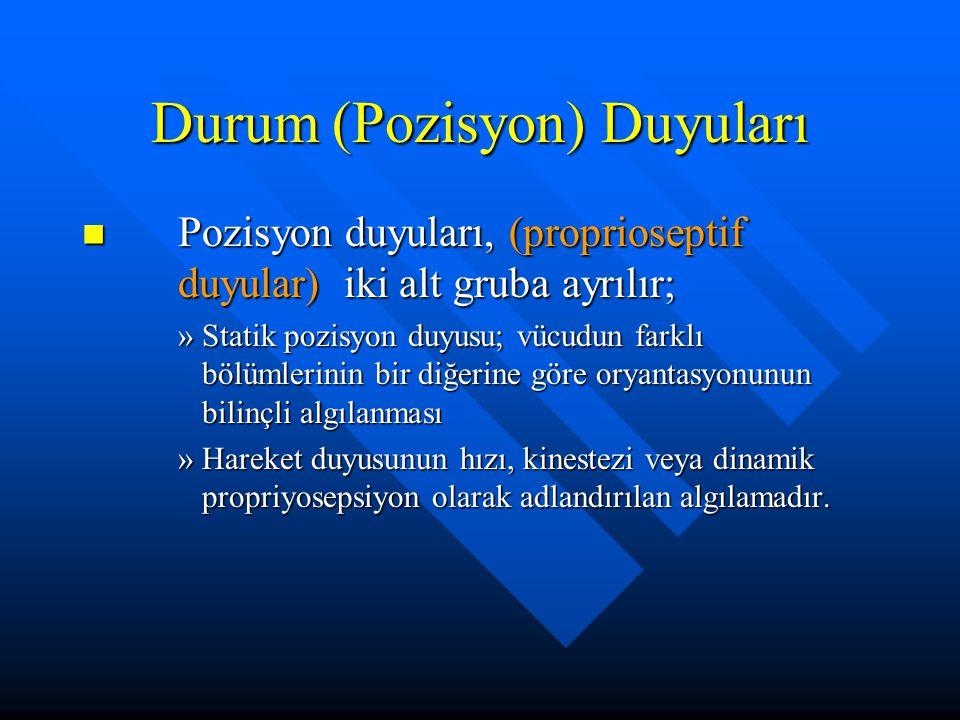 Durum (Pozisyon) Duyuları Pozisyon duyuları, (proprioseptif duyular) iki alt gruba ayrılır; Pozisyon duyuları, (proprioseptif duyular) iki alt gruba a