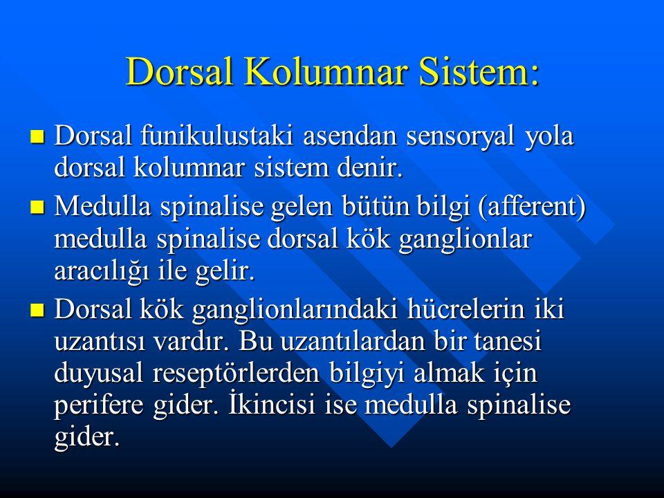 Dorsal Kolumnar Sistem: Dorsal funikulustaki asendan sensoryal yola dorsal kolumnar sistem denir. Dorsal funikulustaki asendan sensoryal yola dorsal k