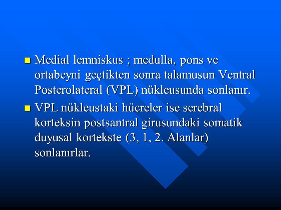 Medial lemniskus ; medulla, pons ve ortabeyni geçtikten sonra talamusun Ventral Posterolateral (VPL) nükleusunda sonlanır. Medial lemniskus ; medulla,