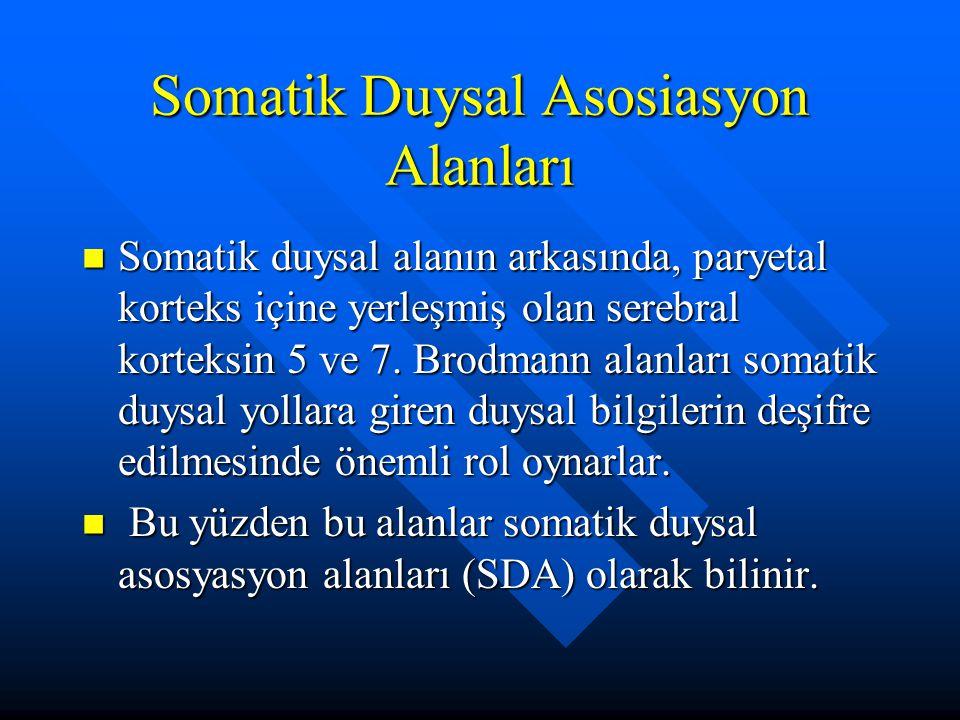 Somatik Duysal Asosiasyon Alanları Somatik duysal alanın arkasında, paryetal korteks içine yerleşmiş olan serebral korteksin 5 ve 7. Brodmann alanları