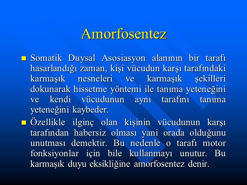 Amorfosentez Somatik Duysal Asosiasyon alanının bir tarafı hasarlandığı zaman, kişi vücudun karşı tarafındaki karmaşık nesneleri ve karmaşık şekilleri