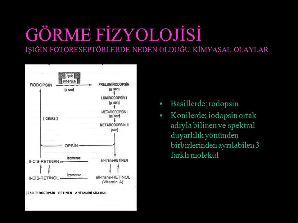GÖRME FİZYOLOJİSİ IŞIĞIN FOTORESEPTÖRLERDE NEDEN OLDUĞU KİMYASAL OLAYLAR Basillerde; rodopsin Konilerde; iodopsin ortak adıyla bilinen ve spektral duy