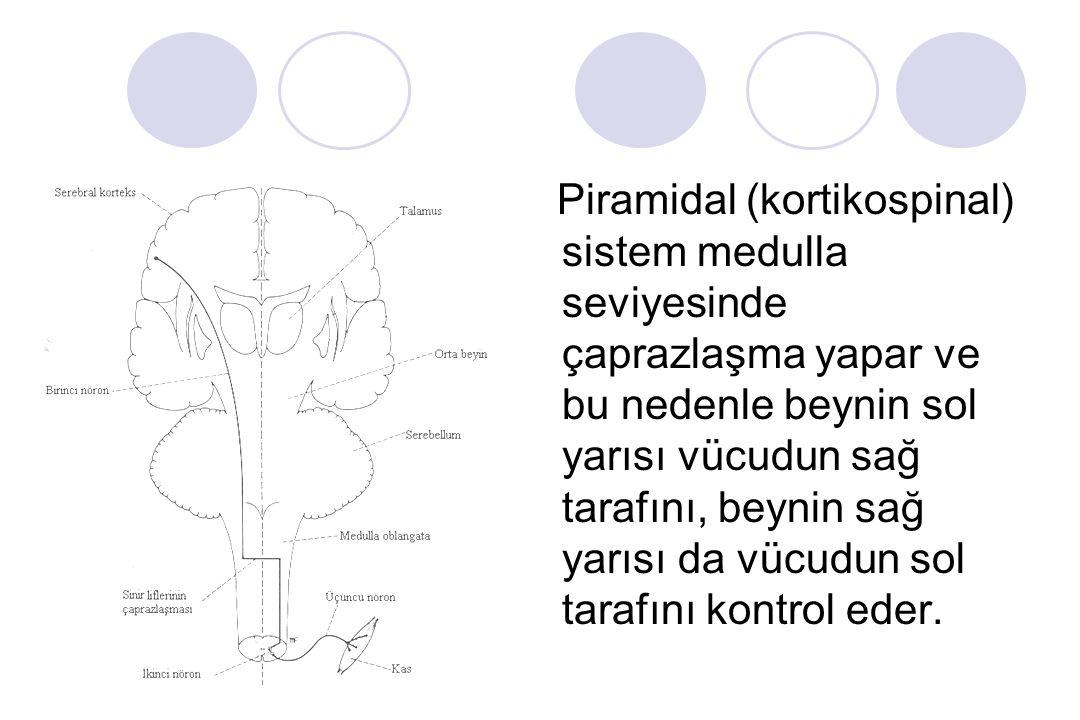 Genel olarak serebellum, motor korteks, proprioseptörler, kutaneöz taktil (dokunma) reseptörleri, işitme ve görme reseptörleri gibi reseptörlerden aff