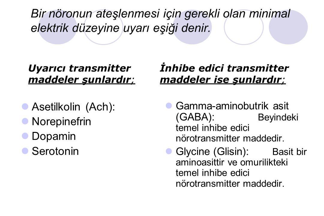Sinaps Bağlantıları Bir sinir hücresinin aksonunun, diğer bir sinirin hücre gövdesi veya dendritleriyle veya her hangi bir başka hücre membranı ile (ö