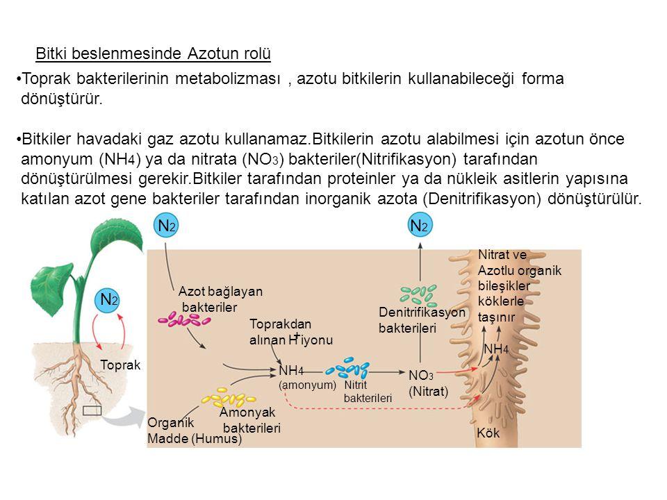 Bitki beslenmesinde Azotun rolü Toprak bakterilerinin metabolizması, azotu bitkilerin kullanabileceği forma dönüştürür. Bitkiler havadaki gaz azotu ku