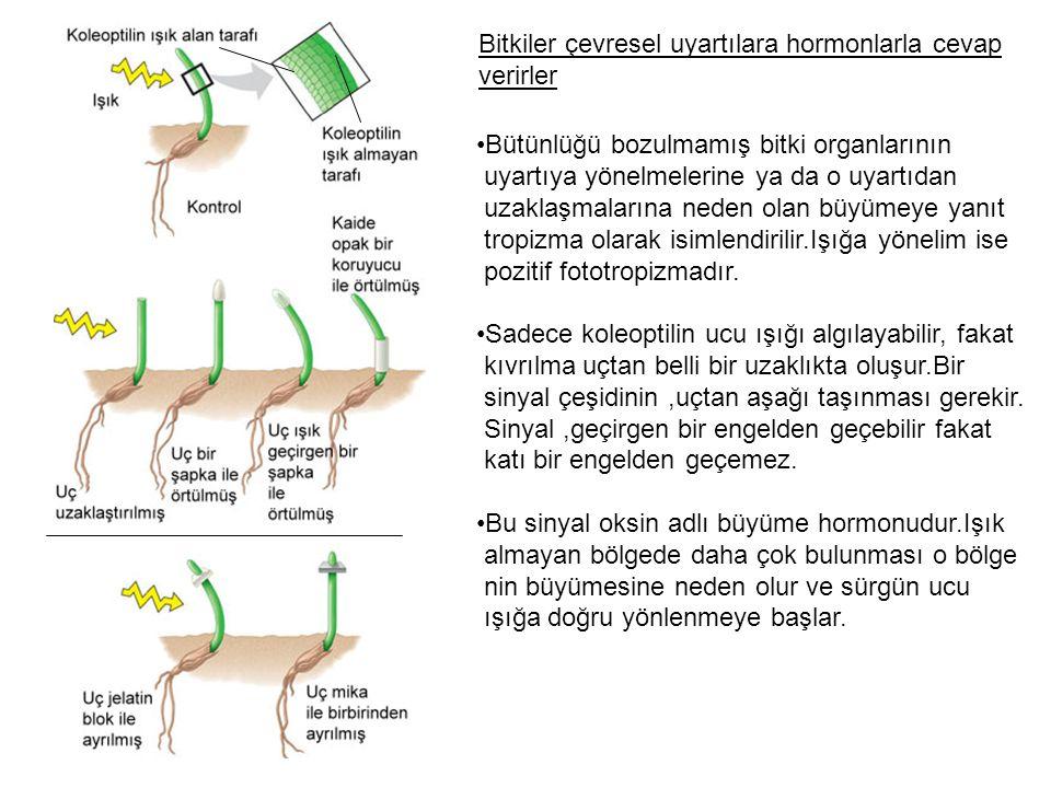 Bitkiler çevresel uyartılara hormonlarla cevap verirler Bütünlüğü bozulmamış bitki organlarının uyartıya yönelmelerine ya da o uyartıdan uzaklaşmaları