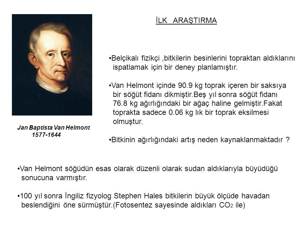 Jan Baptista Van Helmont 1577-1644 İLK ARAŞTIRMA Belçikalı fizikçi,bitkilerin besinlerini topraktan aldıklarını ispatlamak için bir deney planlamıştır