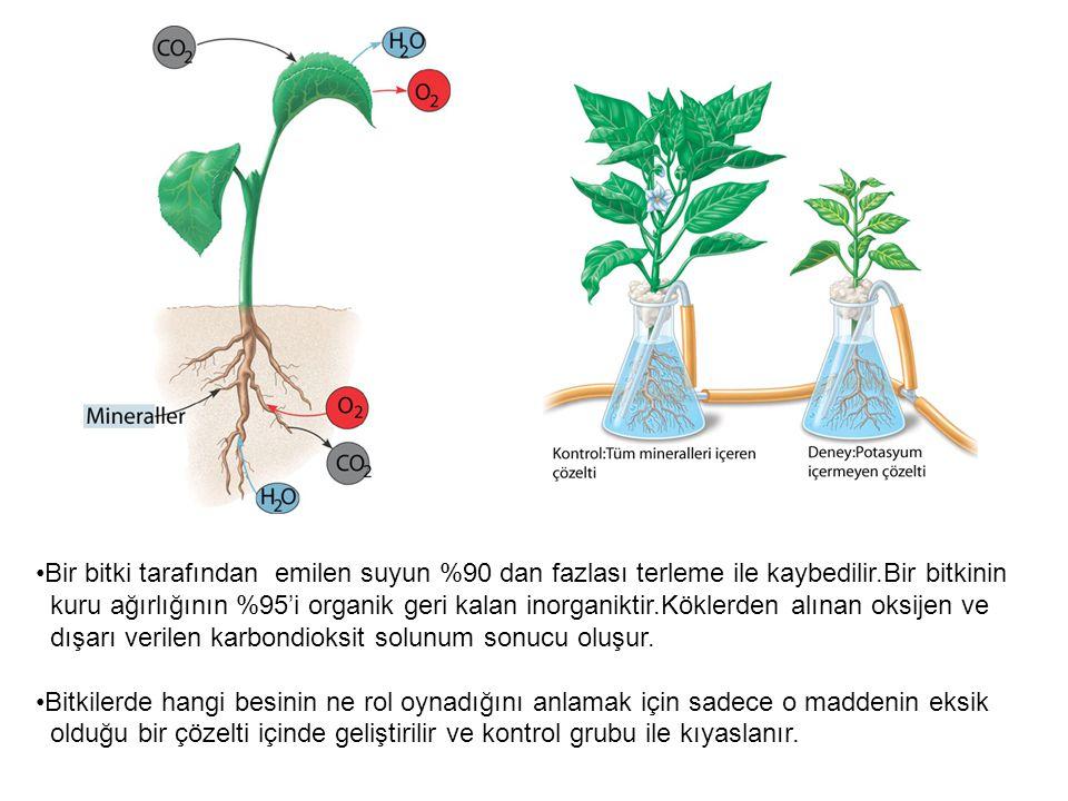 Bir bitki tarafından emilen suyun %90 dan fazlası terleme ile kaybedilir.Bir bitkinin kuru ağırlığının %95'i organik geri kalan inorganiktir.Köklerden