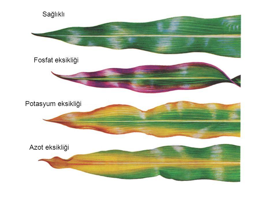 Bitki beslenmesinde toprağın rolü Kayaların parçalanmasından köken alan çeşitli büyüklükteki partiküller, çeşitli parçalanma aşamasındaki organik madde(Humus) ile birlikte toprakda bulunur.
