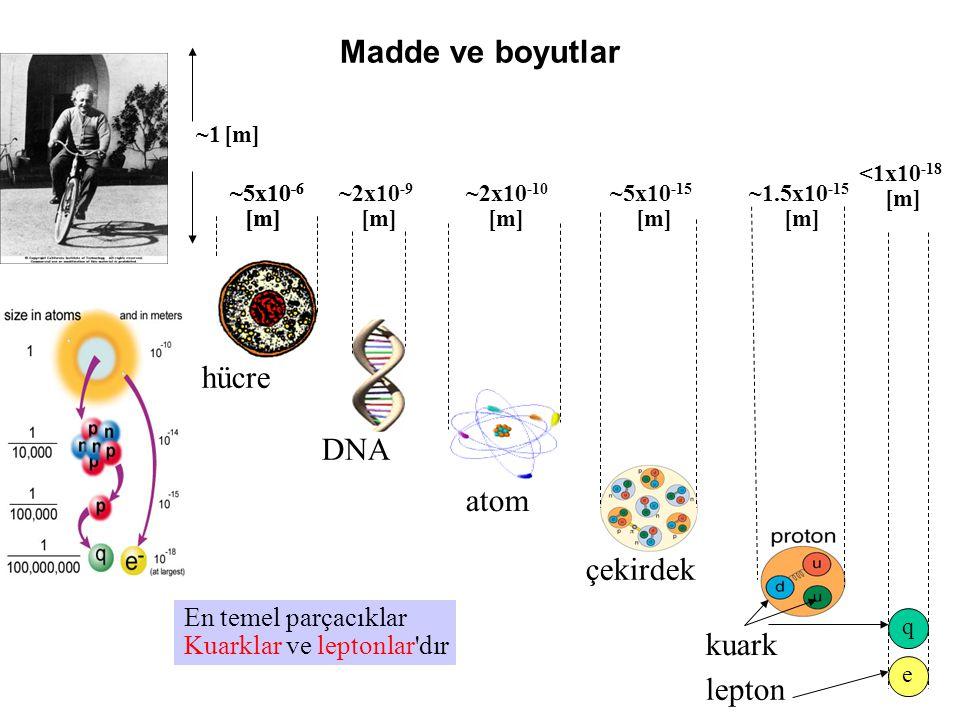Madde ve boyutlar ~2x10 -10 [m] ~5x10 -15 [m] ~1.5x10 -15 [m] ~5x10 -6 [m] ~2x10 -9 [m] q e <1x10 -18 [m] En temel parçacıklar Kuarklar ve leptonlar dır ~5x10 -6 [m] ~1 [m] hücre DNA atom çekirdek kuark lepton