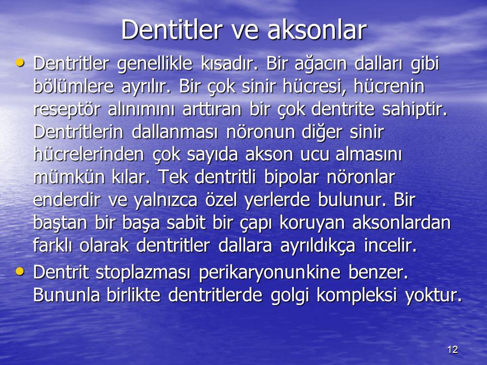 12 Dentitler ve aksonlar Dentritler genellikle kısadır.